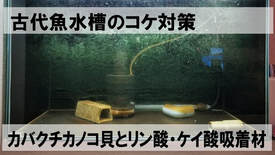 水槽コケ対策1.jpg