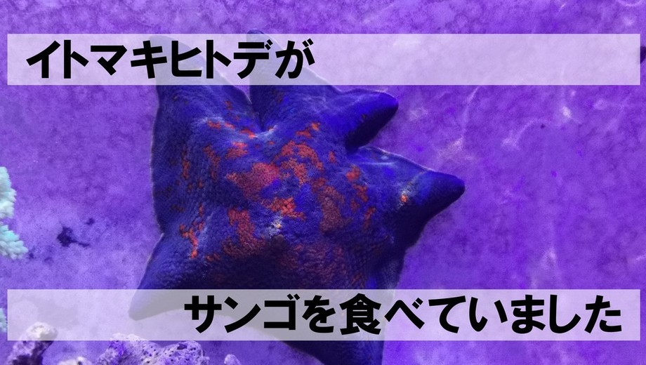 IMG_201200726_204847.jpg
